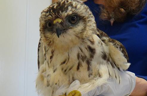 Hawaii Wildlife Center