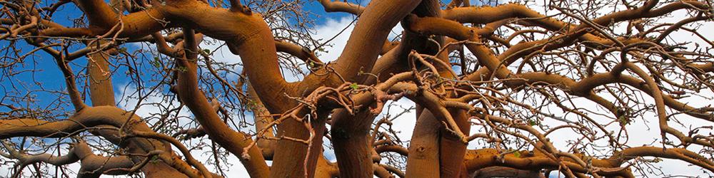 Waikoloa Dry Forest Preserve